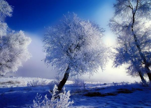 Slika 542 Citati o zimi: Ništa ne peče kao hladnoća