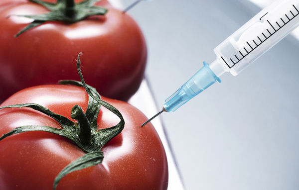 gmo2 Živi zdravo: Genetski modifikovana hrana, smrt na usta ulazi