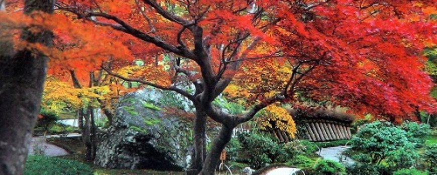 Magična jesen u Japanu