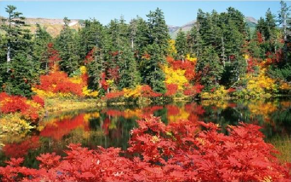 slika 140 Magična jesen u Japanu