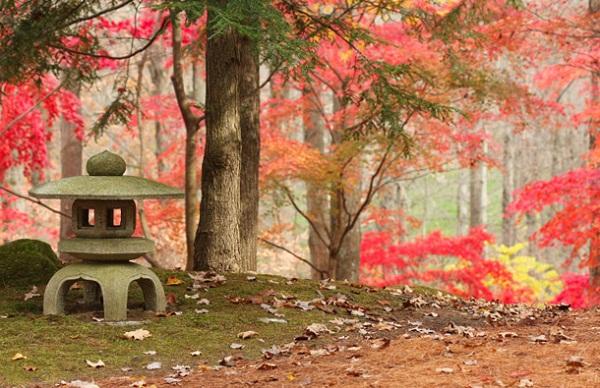 slika 230 Magična jesen u Japanu