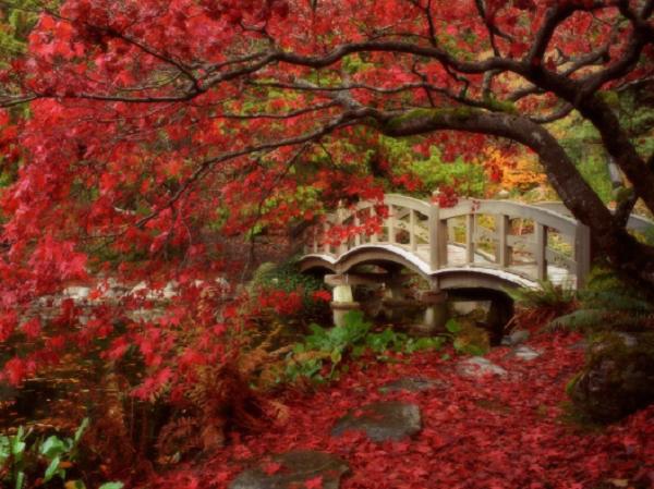 slika 4 Magična jesen u Japanu