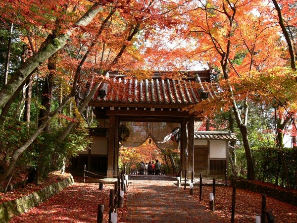 slika 616 Magična jesen u Japanu