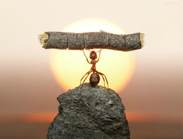 139 Snimi ovo: Zanimljive činjenice o mravima