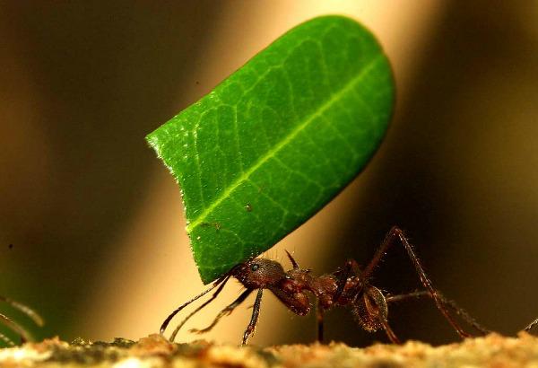 Ants wallpapers 1 Snimi ovo: Zanimljive činjenice o mravima