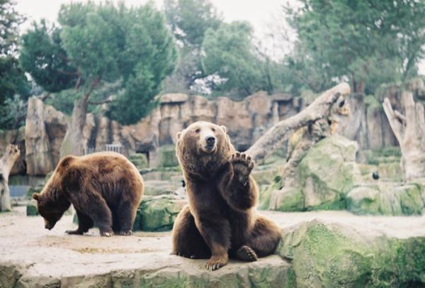U zoolo¹kom vrtu je zabava Iznenadite dragu osobu!