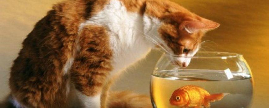 Šta je, ribe, pojela maca jezik?