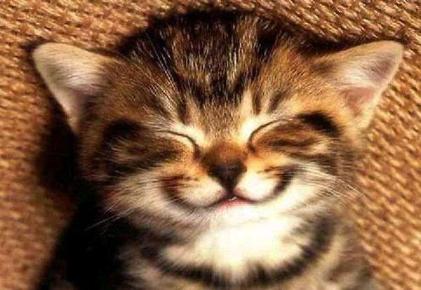 Nasmejana maca Nedelju dana posle Osmog marta