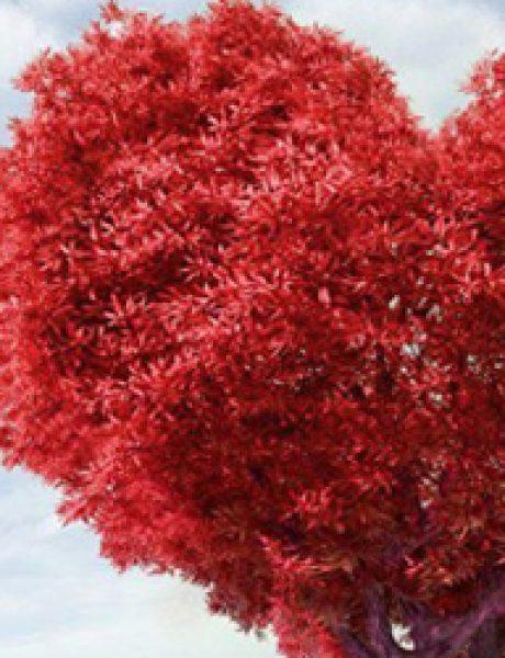 Sedam načina osvajanja sopstvenog srca