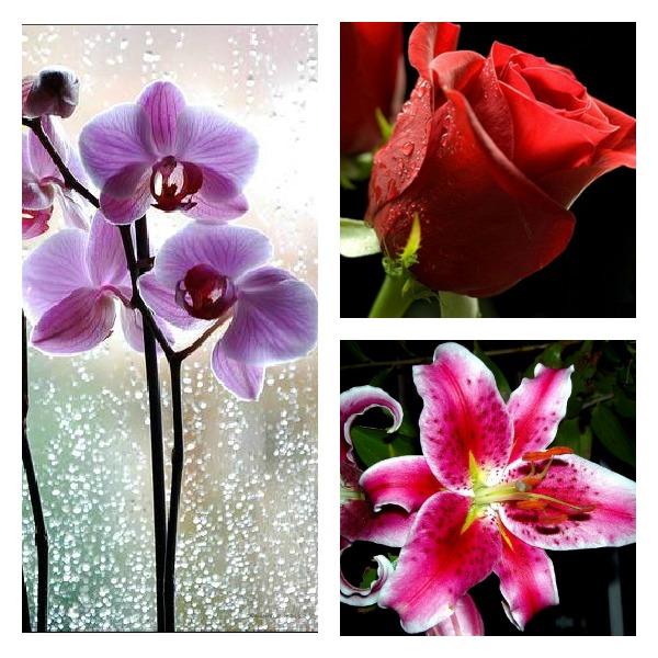 Slika14 Pokloni mi cvet ako smeš, dragi!