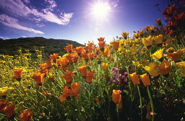 springsun Proleće je vreme za nove početke