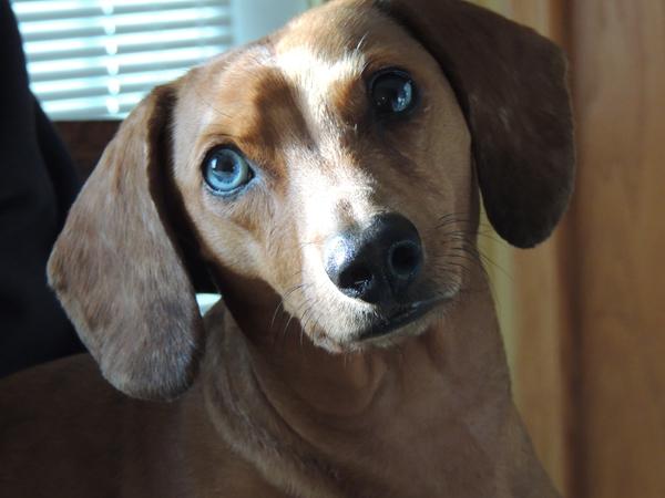 2slika Živi zdravo: Hrana iz kuhinje koja ubija pse