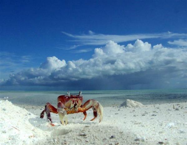 Božićno ostrvo slka 7 Najčarobnija ostrva na planeti!