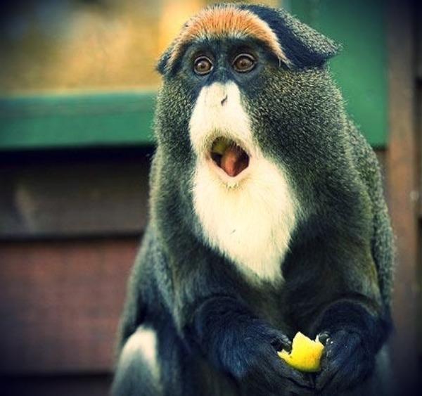 Ja sam majmunče Debrazza Sve lepote zemlje safarija