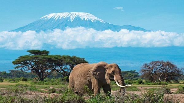 Kilimandžaro na dohvat ruke Sve lepote zemlje safarija