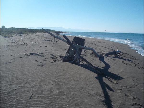 4909482 Ada Bojana Beach September 2010 Ada Striptiz za pismene: Dekontaminacija, ili mozga bez