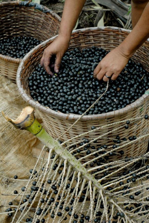 Akai bobice 30 najefikasnijih namirnica koje pročišćavaju kožu (1. deo)