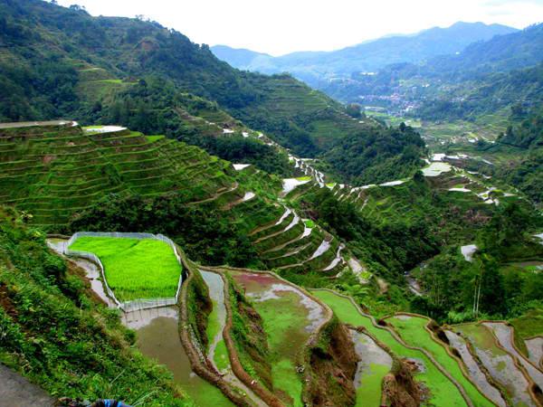 Terase ri¾inih polja Drevna čuda Azije