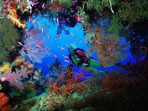 Ronilac i podvodni svet Letnje igre i morska avantura: Vodeni sportovi