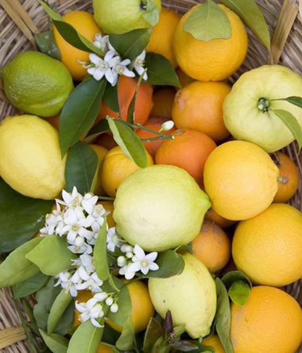 Vitamin C Ka boljem zdravlju: Dvanaest vitamina i minerala (1. deo)