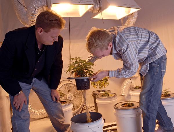 Dva coveka sade marihuanu Luda planeta: Pet škola koje su sinonim za zabavu
