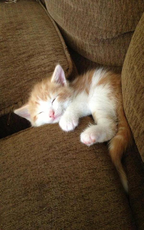 Macke 2 Umiljate životinje: Mačke