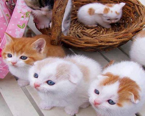 Macke 3 Umiljate životinje: Mačke