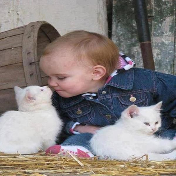 macke 5 Umiljate životinje: Mačke