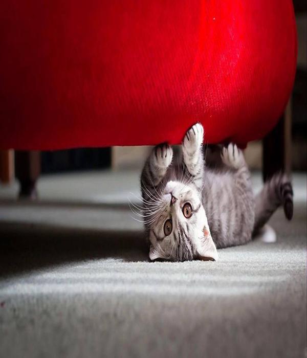 macke 7 Umiljate životinje: Mačke