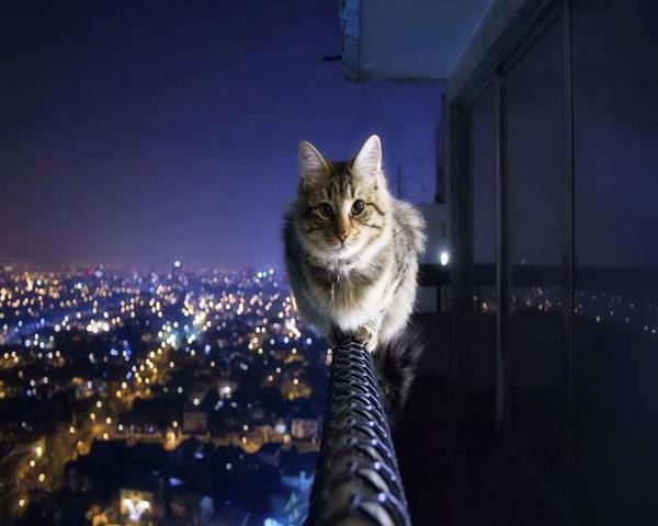 macke 9 Umiljate životinje: Mačke