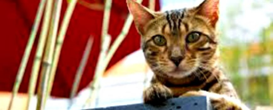 Cigla u glavi: Mačke na uslovnoj slobodi