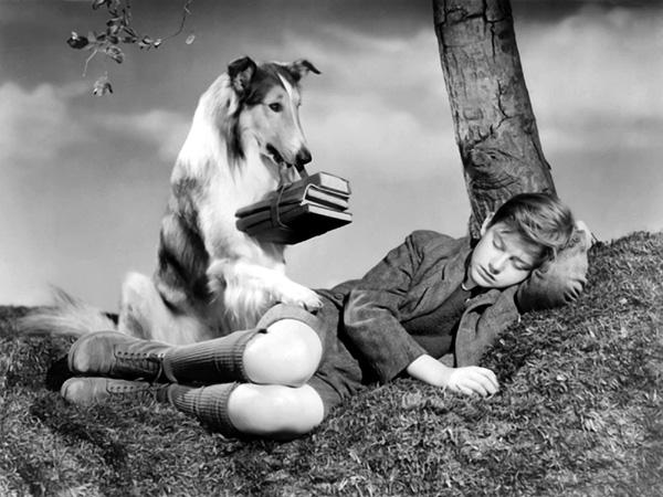 SLIKA 2 Lesi Psi: Filmske zvezde