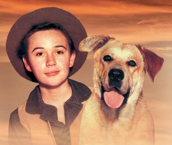 SLIKA 3 Old Yeller Psi: Filmske zvezde