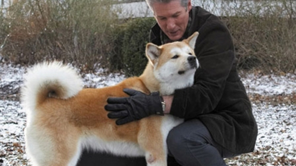 SLIKA 4 hachiko a dogs story Psi: Filmske zvezde