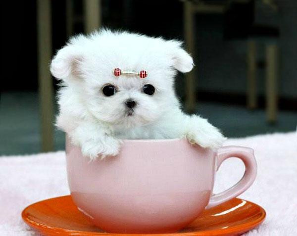 slika81.jpg1 Najsimpatičnije fotografije umiljatih i šik kučića
