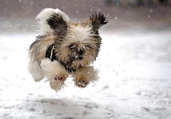 Good Small Dog Modna revija malih pasa u Ušće Shopping Centru