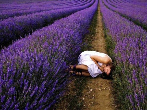 Miris lavande opusta i uspavljuje Miris Provanse na jastuku   lavanda