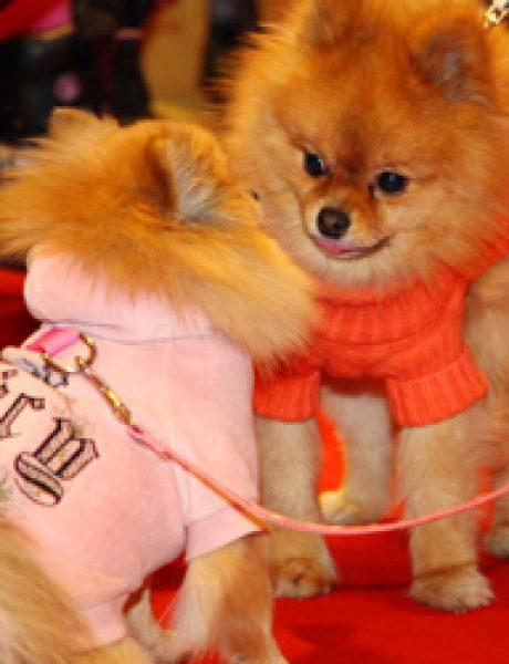 Proglašeni pobednici modne revije malih pasa