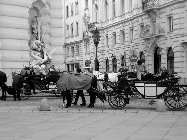Picture 163621 Wannabe Photo Wall: Šetajući ulicama Beča