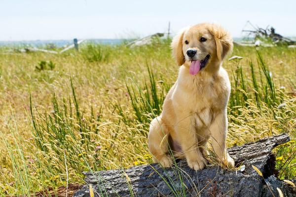 imati psa u kuci znaci imati neizmernu ljubav Pas = sreća = zdravlje