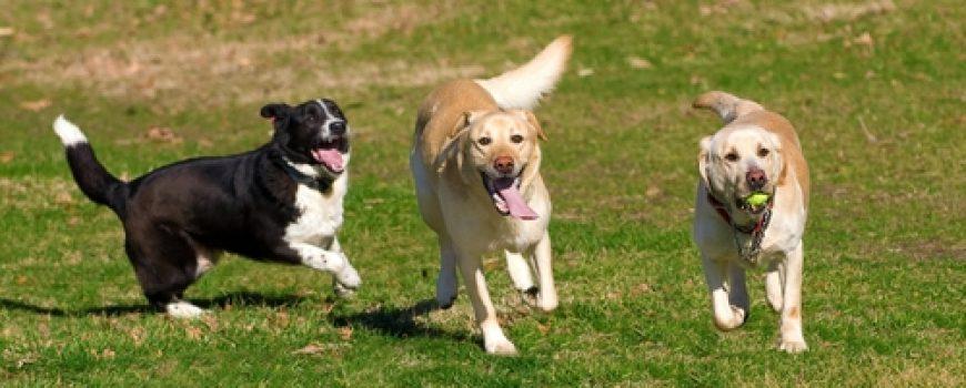 Pas = sreća = zdravlje