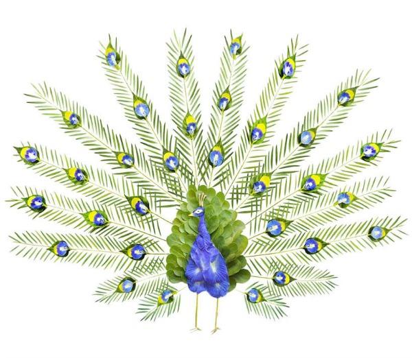 paun Ptice od latica cveća