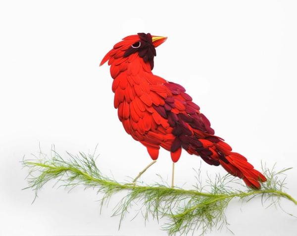 severni kardinal Ptice od latica cveća