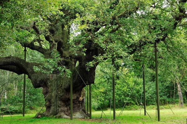Razgranato drvo Sedam lokacija između mita i istine