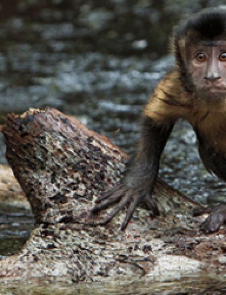 """Film koji dolazi u februaru: """"Amazonija"""""""