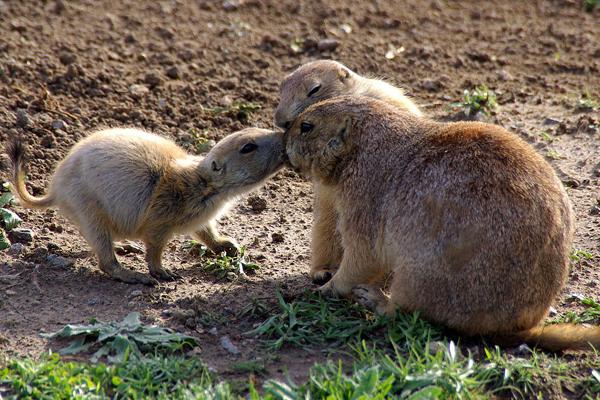 Kiss Kiss Ljubav u životinjskom carstvu