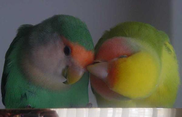 Mi Amor Ljubav u životinjskom carstvu