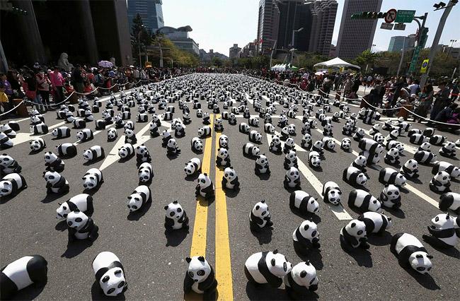 12 Ovo je tako kul: Izložba posvećena pandama