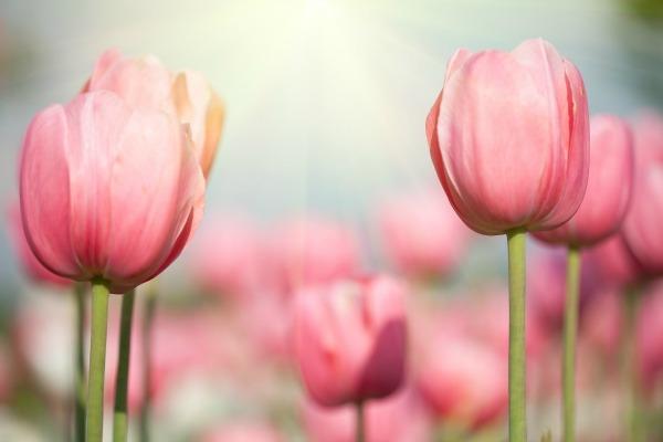 178 Proleće se budi, probudi se i ti!