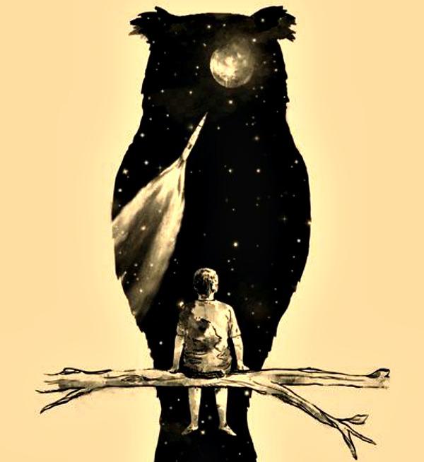 279 Noćne ptice i ritam života